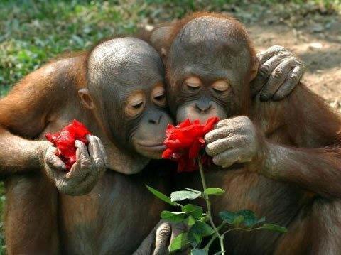 Fotos Bonitas Y Fotos Tiernas Changuitos Con Rosas