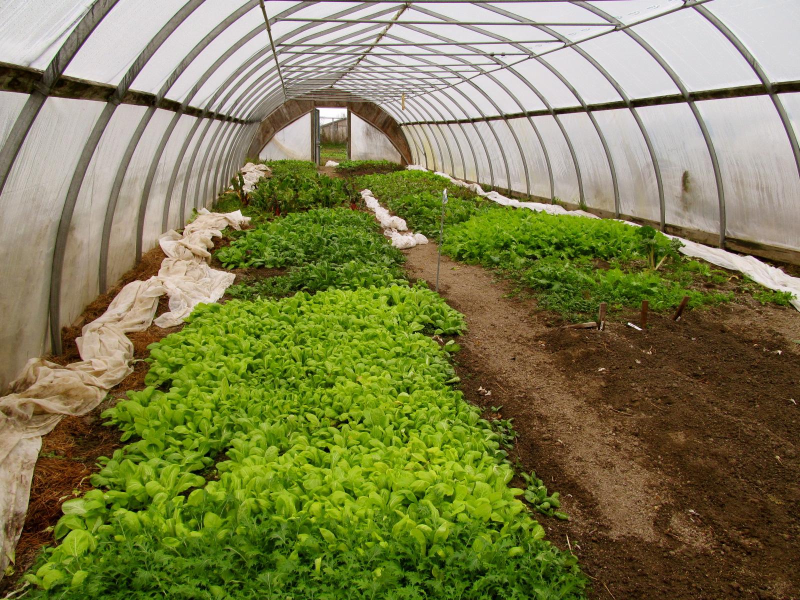 Tree And Twig Farm Blog Csa Week 9 And Beet And Arugula Salad