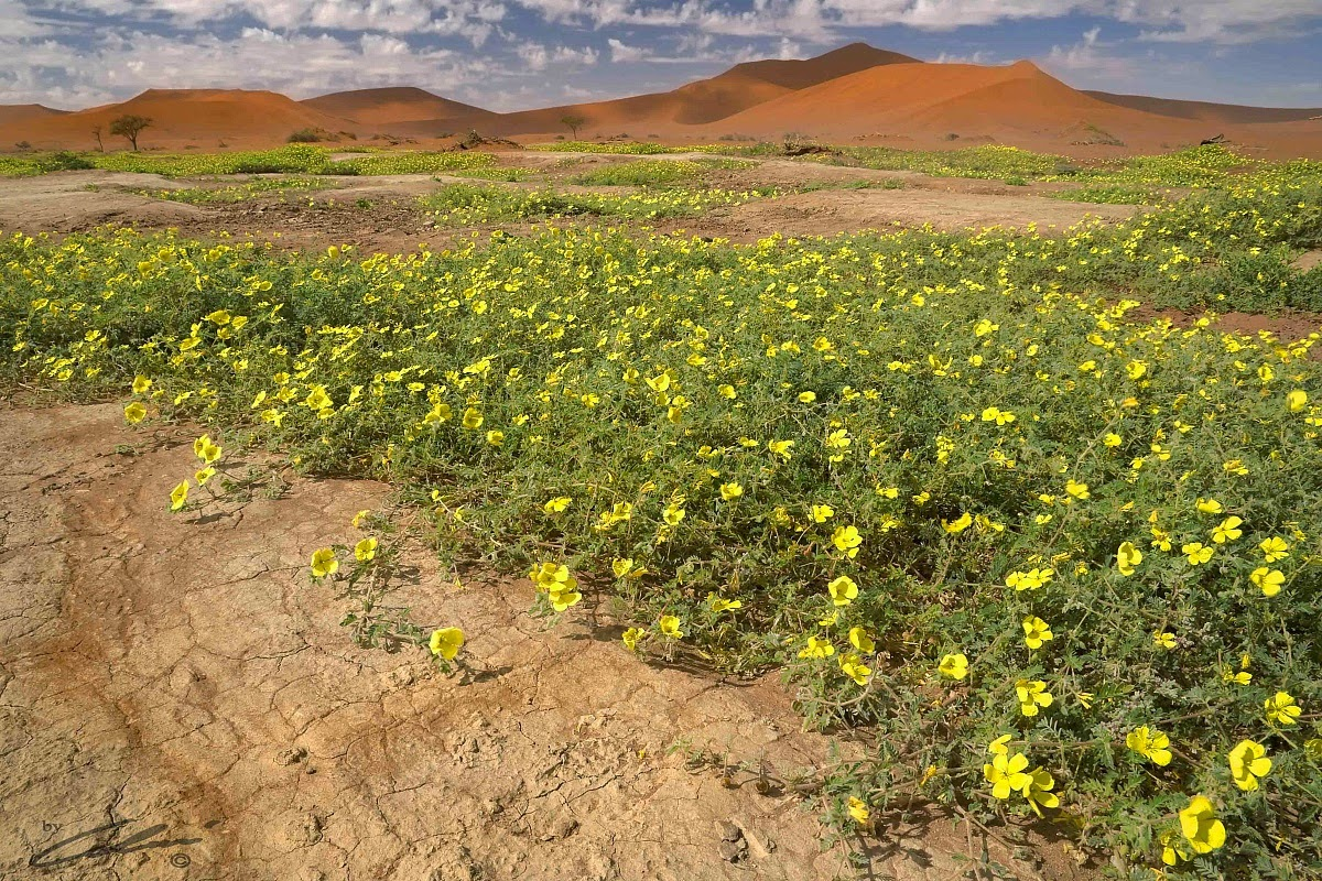 Fiori Nel Deserto.Adventurelifeprojectafrica Andrea Pompele Africa The Mother