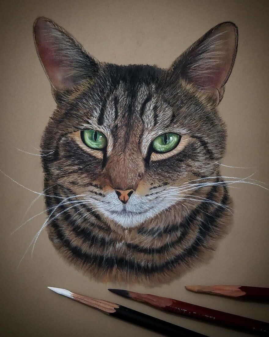05-Cat-Rene-Lopez-Animal-Pencil-and-Pastel-Portrait-Drawings-www-designstack-co