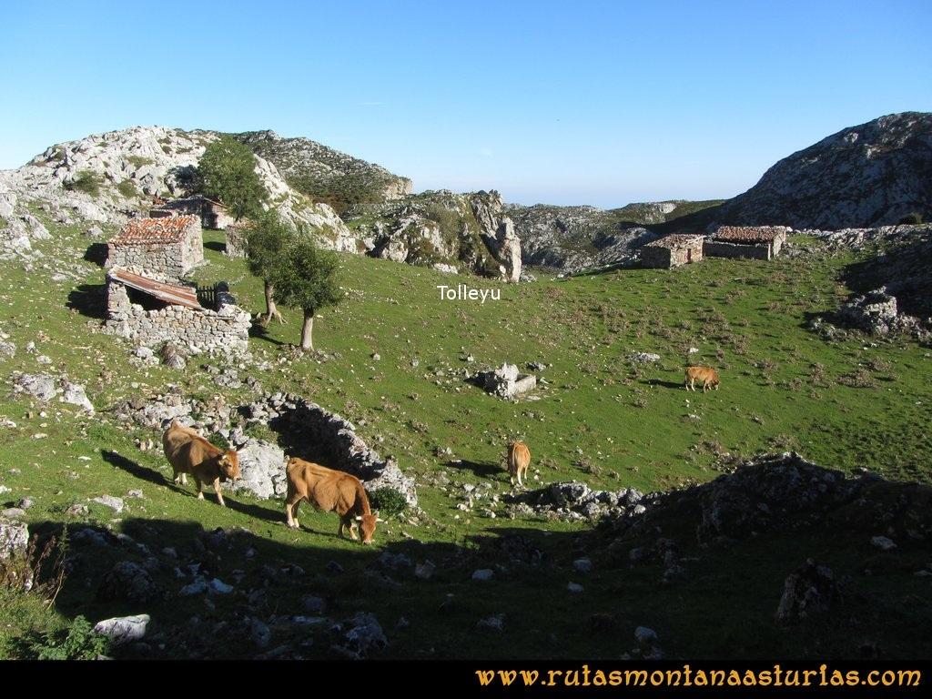 Ruta Ercina, Verdilluenga, Punta Gregoriana, Cabrones: Majada Tolleyu
