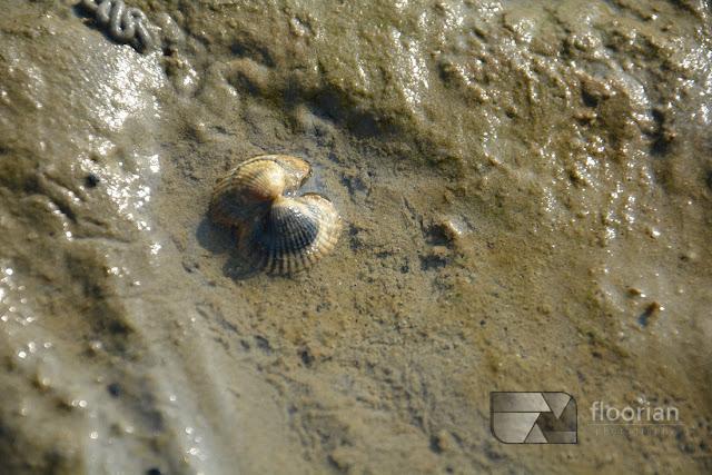chodzenie po dnie Morza Wattowego