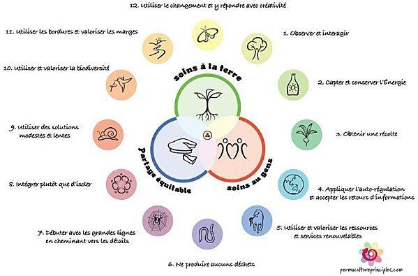 schéma en couleur avec du texte montrant les 12 principes de la permaculture par David Holmgren
