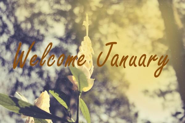 stt chào tháng 1 - tháng đầu tiên của năm mới