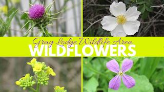 vaughn the road again wildflower blooms flower guide