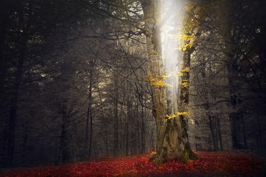 omorfos-kosmos.gr - 12 μαγευτικές φωτογραφίες δασών