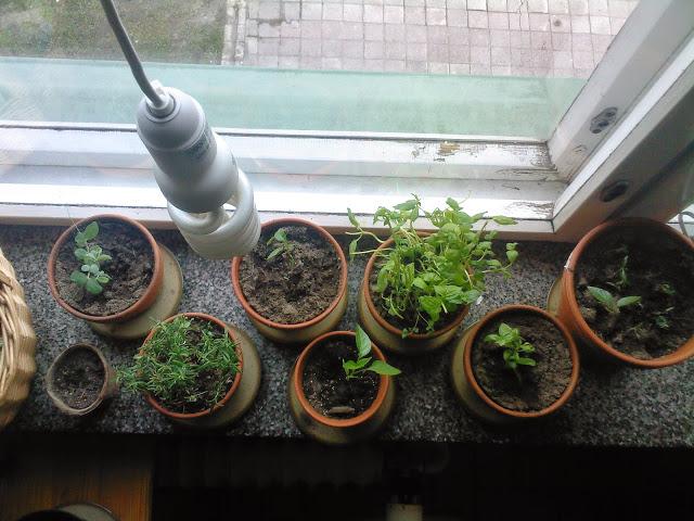 päivänvalolamppu kasveille