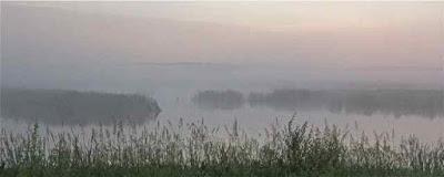 Summer Marsh 1