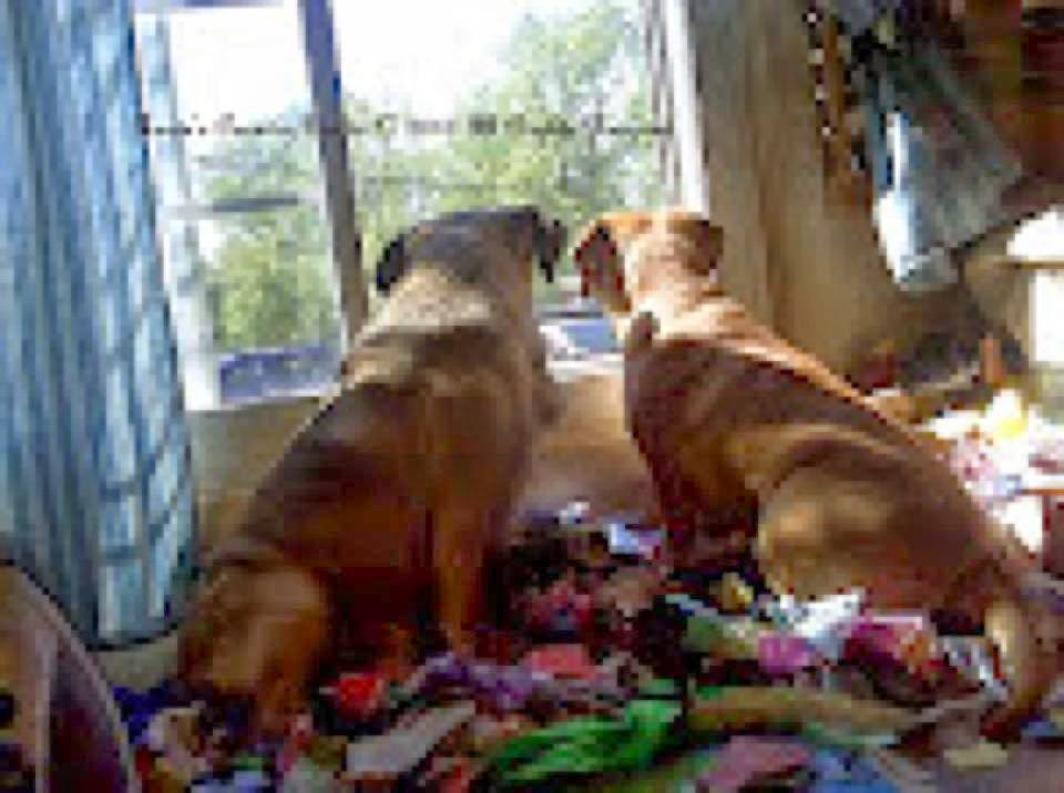 ren233es country quilts llc the puggle page