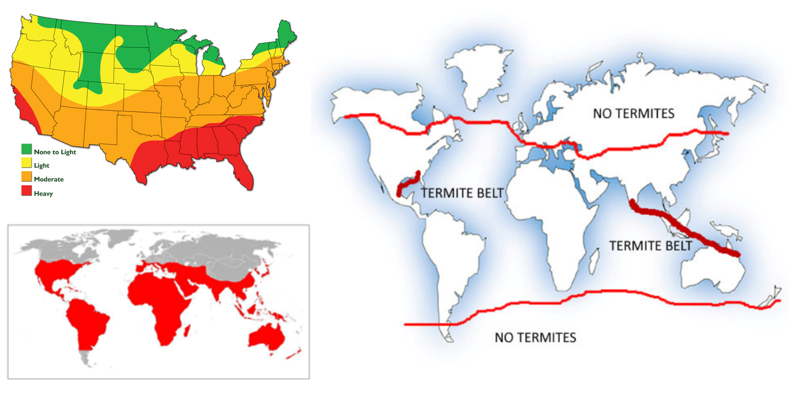 Geographical distribution of termites