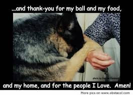 and thank-you for my ball and my food,