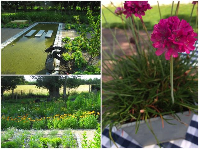 Beautiful flowers in Denmark gardens