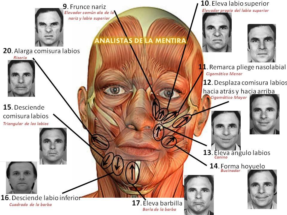 ANALISTAS DE LA MENTIRA: Análisis del Comportamiento No Verbal y ...