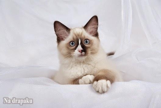 Brylant Biały – nowy żwirek dla kotów