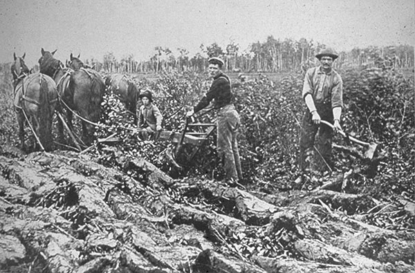 White Settlers clearing the land to prepare for planting