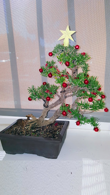 bonsai christmas tree