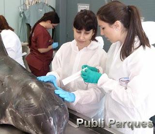 Chelo Rubio, en medicina forense