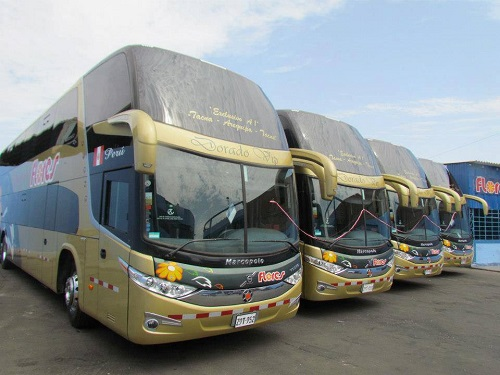 buses flores