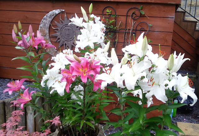 these lilies just keep coming up every year