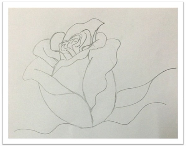 Drawing rose step by step