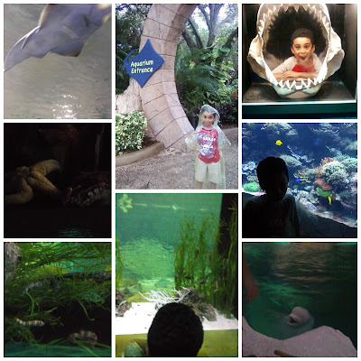SeaWorld Orlando Educational Aquarium Grandchildren