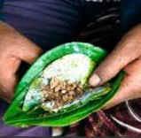 Manfaat daun sirih | Khasiat daun sirih untuk kesehatan