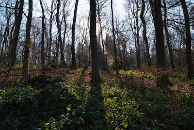 Kahle Bäume. Hinter dem mittleren Baum scheint die Sonne, im Vordergrund ist ein buntes Spiel aus Licht und Schatten zu sehen