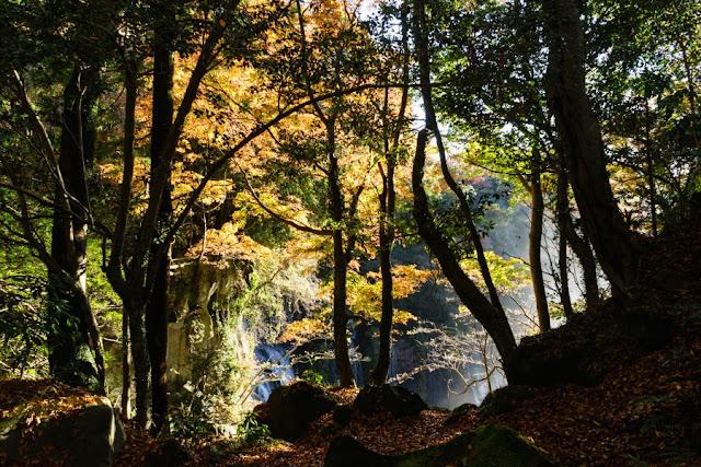 お鬢水(静岡)からの紅葉