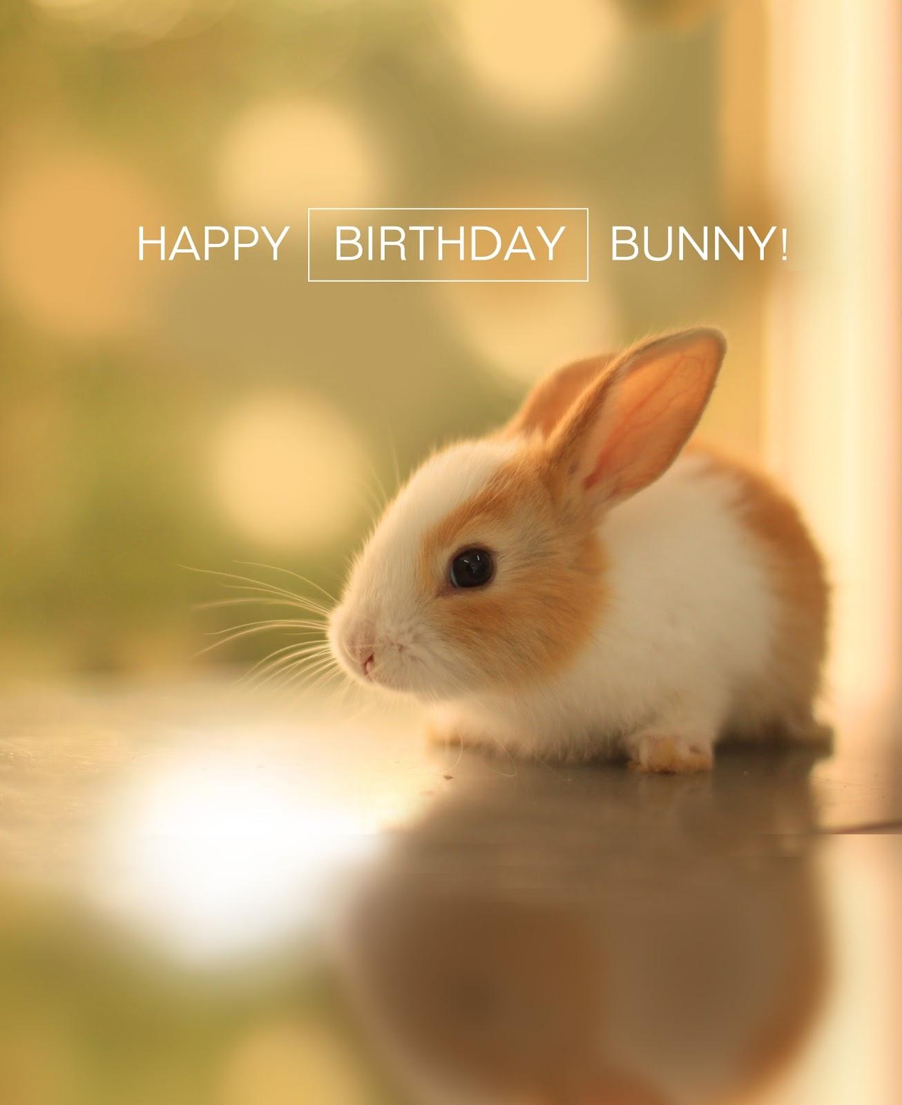 josh butler rabbit