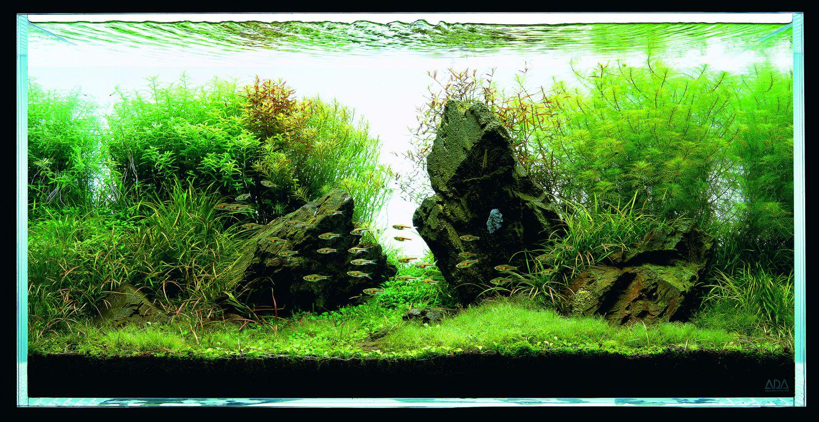 Một hồ thủy sinh có sự hiện diện của cây thanh hồ điệp