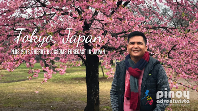 My Cherry Blossoms Experience + 2018 Cherry Blossom Forecast in Japan