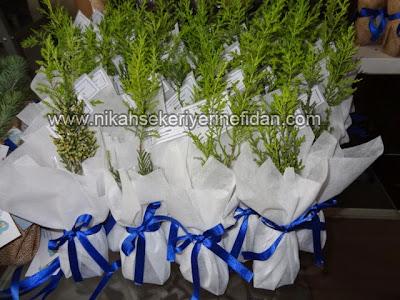 nikah fidanı nikah bitkisi fiyatları 4