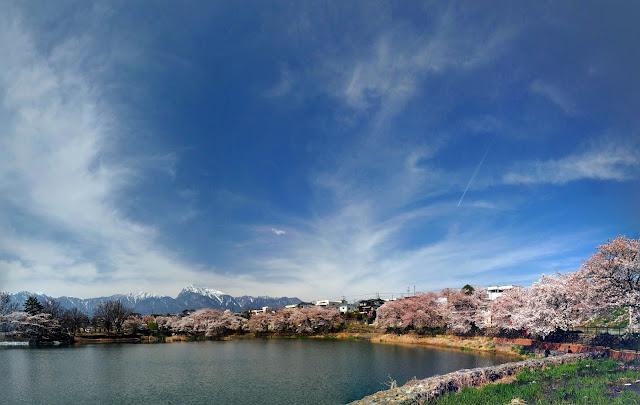 北杜 長坂牛池 桜