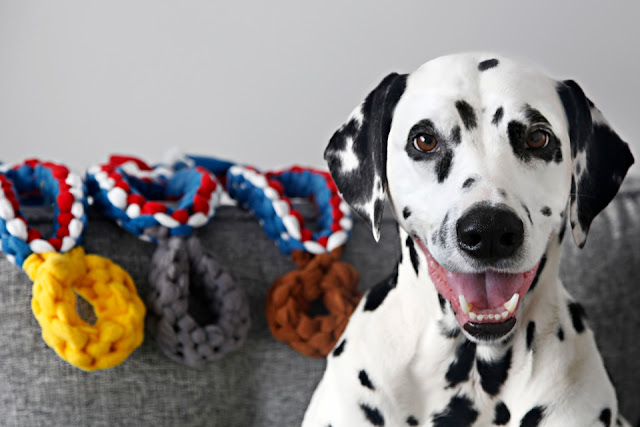 http://dalmatiandiy.blogspot.co.nz/2016/07/diy-olympic-medal-dog-tug-toys.html