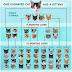 Οι σημαντικότεροι λόγοι για τη στείρωση της γάτας