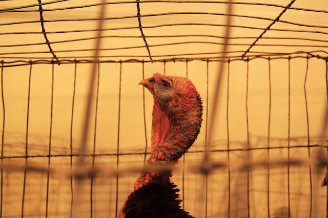 Fotos:aves en exposicion