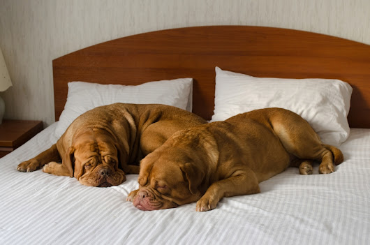 4 Reasons to NOT Let Your Dog Sleep in Your Bed