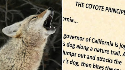 The Coyote Principle CALIFORNIA