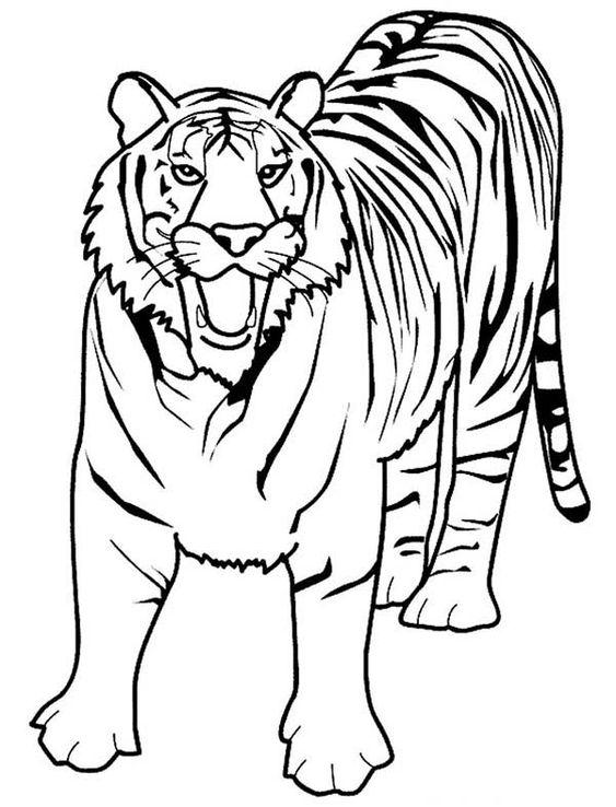 Tranh tô màu con hổ đang gầm