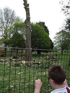 tree surgeons milton park portsmouth