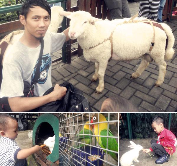 Mini Zoo Farm House Susu Lembang