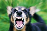 Kabupaten Bima Waspada Penyakit Rabies