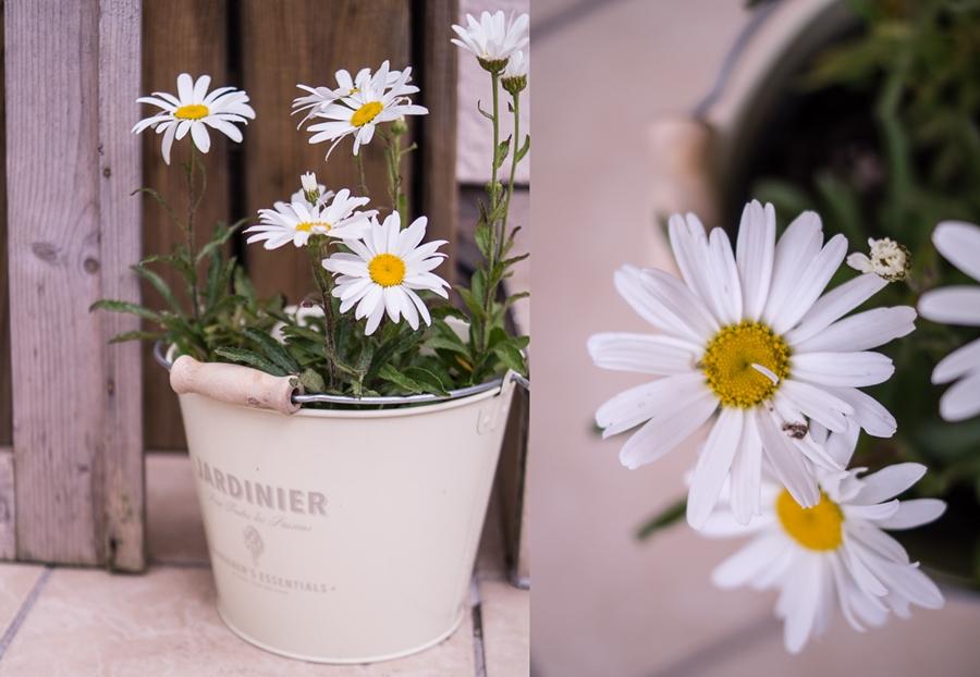 Blog + Fotografie by it's me! | fim.works | Bunt ist die Welt | Garten im Juni 2016 | Margerite im Blecheimer, Blüten