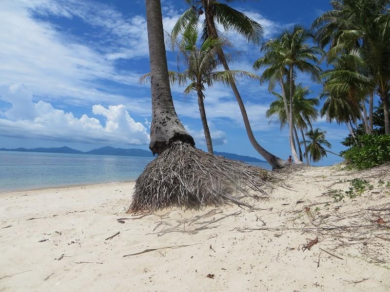 Корни пальм на пляже