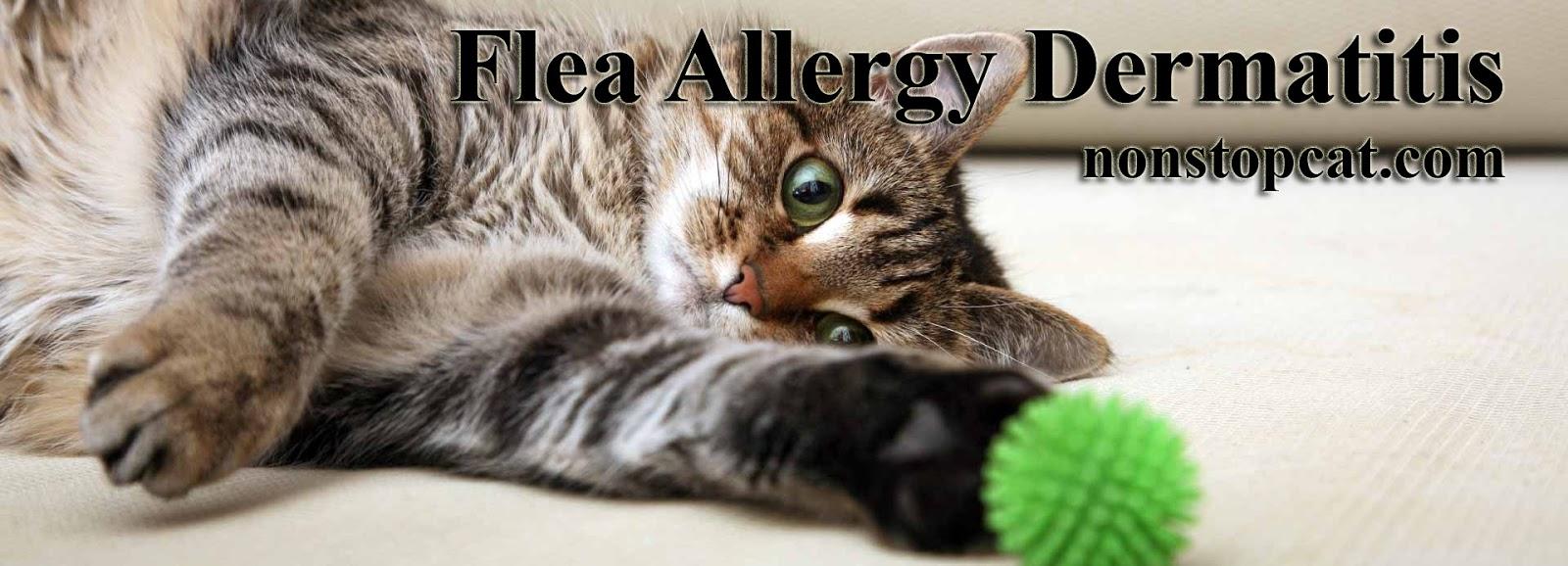 Flea Allergy Dermatitis