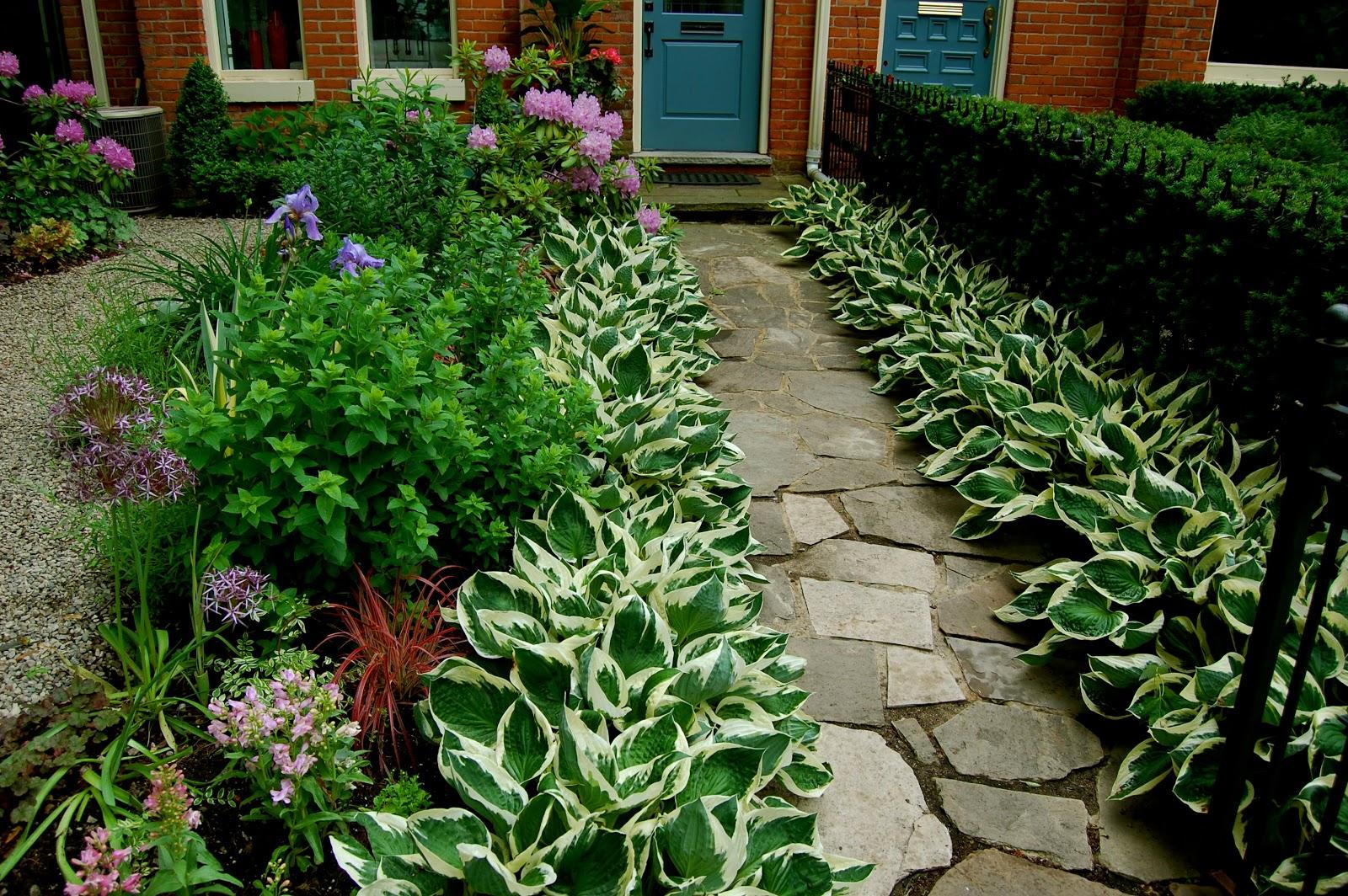 Astrid's Garden Design: Good Old Reliable Hostas