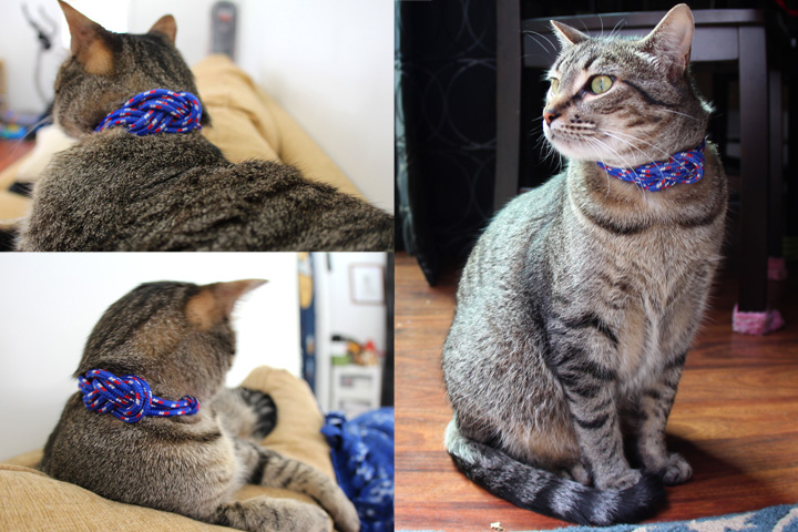 Lovelly Pets My Cat Goma Blog Update