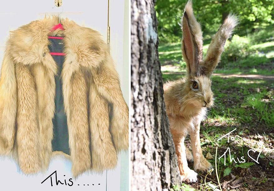 02-Hare-Rachel-Austin-www-designstack-co