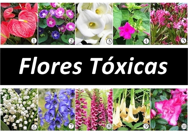 Cuidado com as flores tóxicas e venenosas