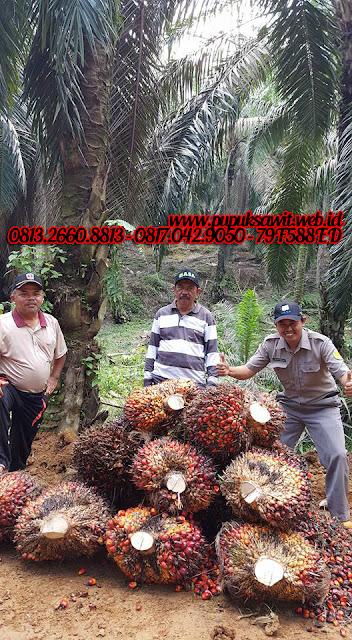 Pupuk Kelapa Sawit Organik Nasa